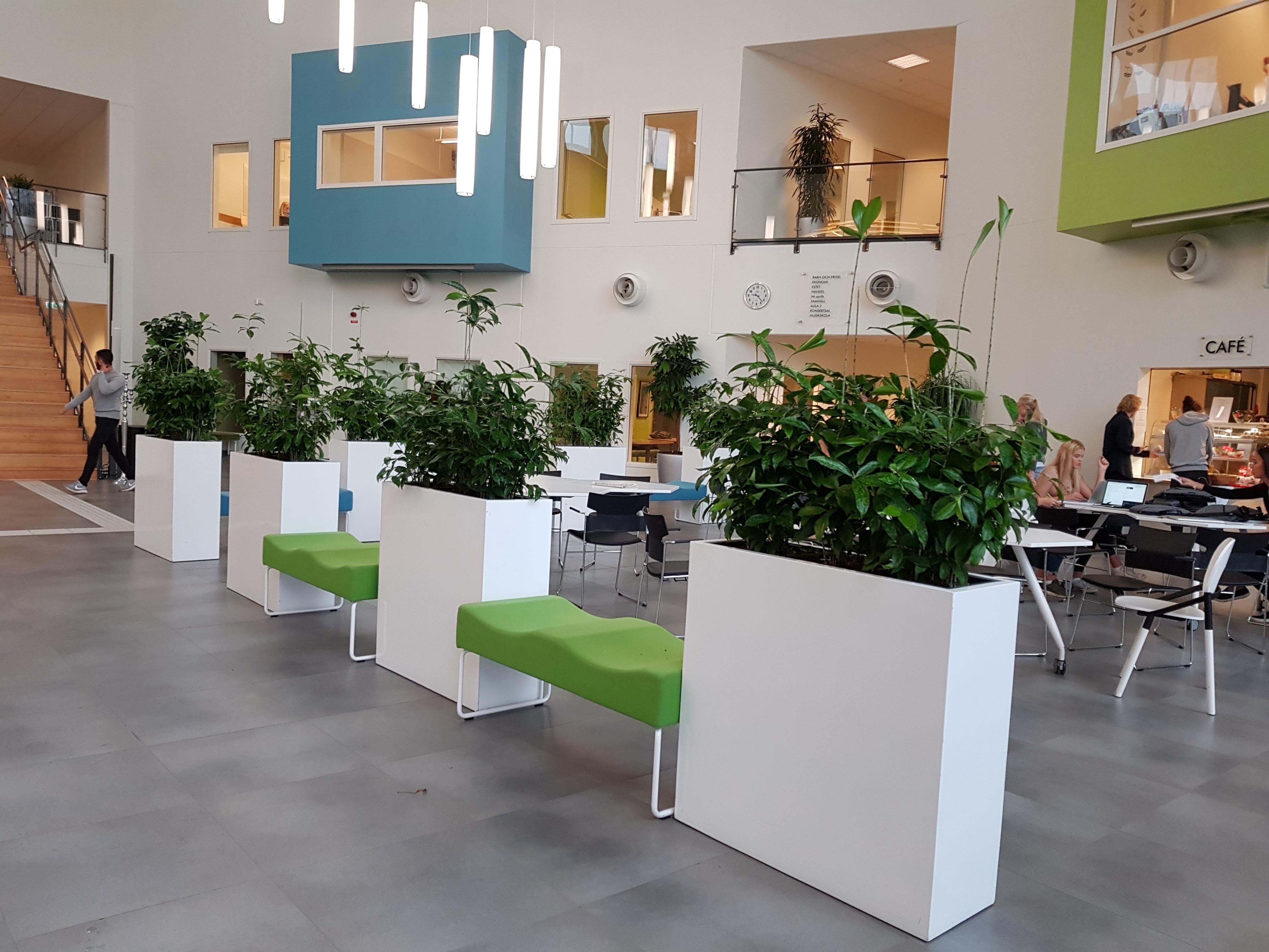 Växter på arbetsplatser. Alla arbetsplatser!