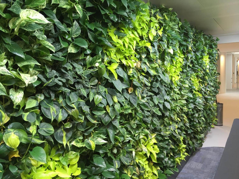 Växtvägg företag